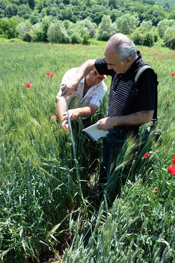 Gagik Mkrtchyan with Mekhitar Grigoryan of A.T.G., documenting the characteristics of one of the wheat varieties in the border village of  Varagavan, one of 320 villages in which A.T.G. has been active since its inception